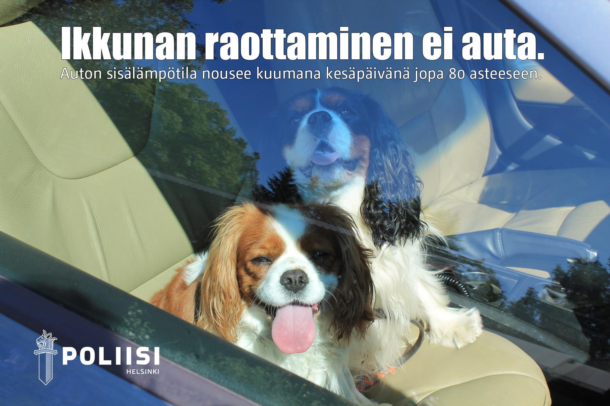 poliisi eläin autossa